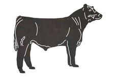 Angus Bull DXF File