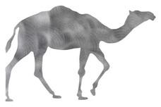 Camel Stock Art