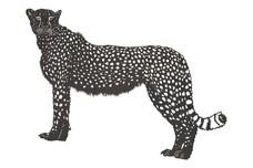 Cheetah DXF File