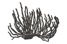 Silhouette of Coral DXF File
