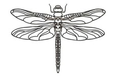 Dragonfly Stock Art