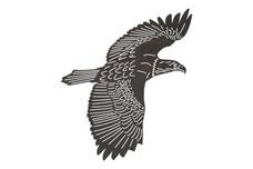 Golden Eagle DXF File