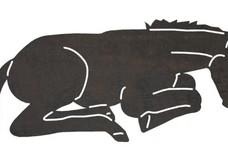 Sleeping Foal DXF File