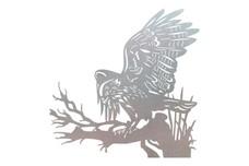 Hawk Wall Art
