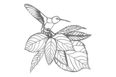 Humming Bird Wall Art