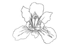 Iris Flower Stock Art