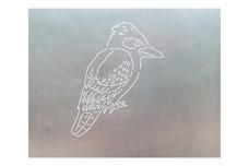 Kookaburra Bird DXF File