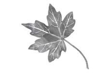 Maple Leaf DXF File