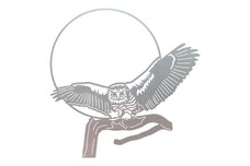 Owl Stock Art