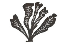 Patch of Seaweed DXF File