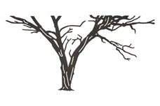 Large Bare Tree DXF File