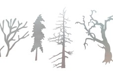 Tree Branches DXF File