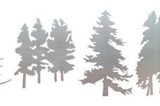 Trees - Pine Types DXF File