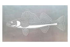 Walleye Fish Stock Art