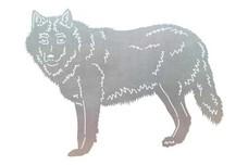 Wolf Stock Art