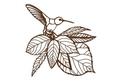 Humming Bird Wall Art