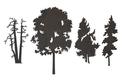Trees Wall Art